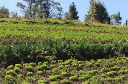 Prefeitura lança o 1º Plano Rural Agroecológico Paulistano