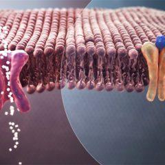 Pesquisadores brasileiros criam sensor óptico para detecção de glicose