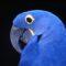 Programa BIOTA promove concurso de fotografia