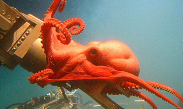 Mar Profundo: Dia Mundial dos Oceanos