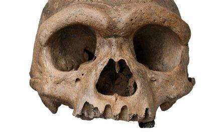 O impressionante crânio do 'Homem-Dragão' pode ser um indescritível Denisovan – ou uma nova espécie de humano
